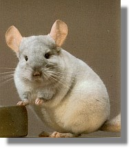 chinchilla hellbeige